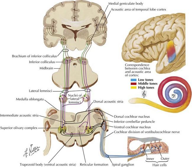 Cranial Nerve Viii Clinical Gate