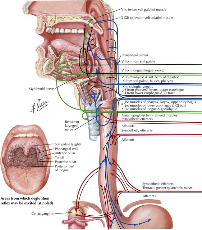 Cranial Nerves IX and X | Clinical Gate