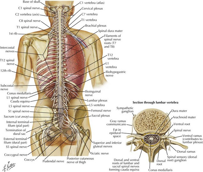 Anatomic Aspects Of Spinal Cord Disorders Clinical Gate