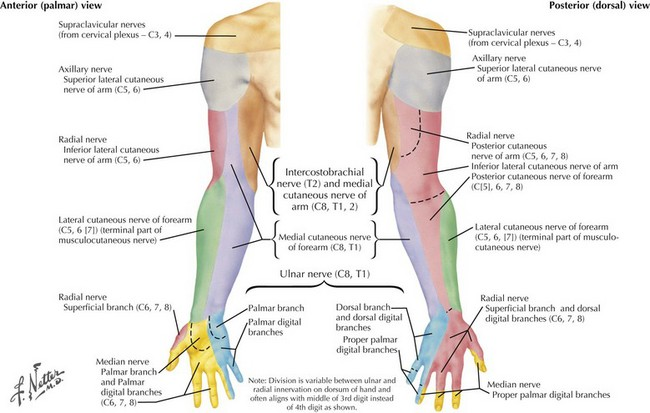 Mononeuropathies Of The Upper Extremities Clinical Gate