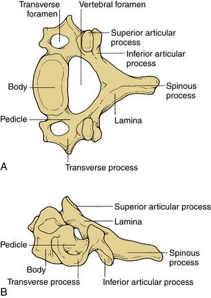 Practical Anatomy and Fundamental Biomechanics   Clinical Gate