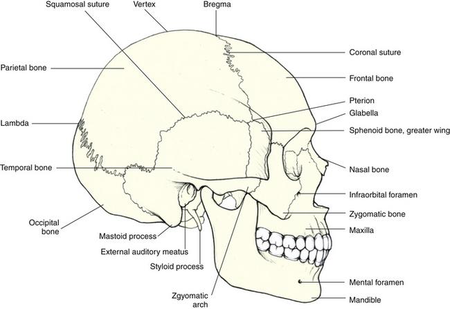 sagittal suture bone