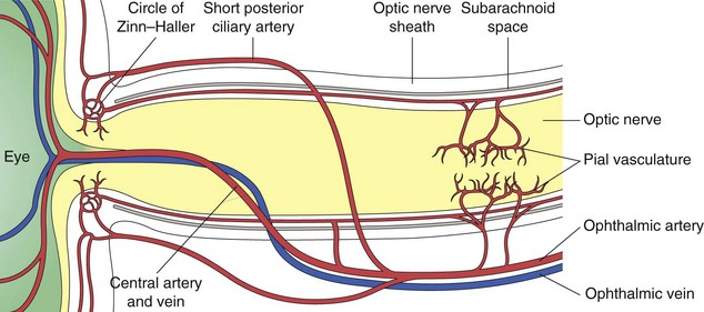 Neuro-ophthalmology | Clinical Gate