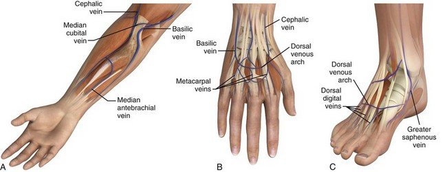 peripheral intravenous access | clinical gate, Cephalic vein