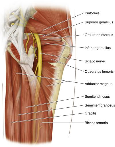 Sciatic Nerve   Clinical Gate