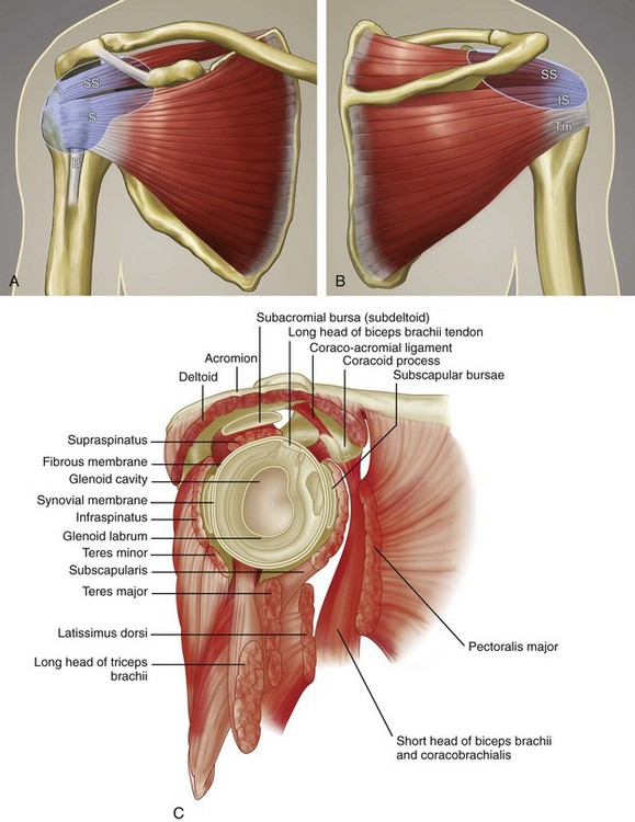 Shoulder Ultrasound | Clinical Gate