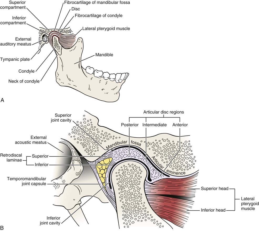 Temporomandibular Joint | Clinical Gate