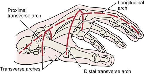 Dural Folds And Cavernous Sinus besides Imaging In Appendicitis in addition Species moreover Gait Analysis 16066737 furthermore Mandible At Different Ages Dentition. on transverse plane