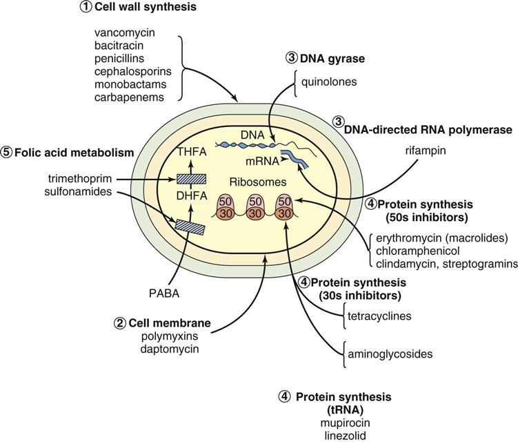clarithromycin 500