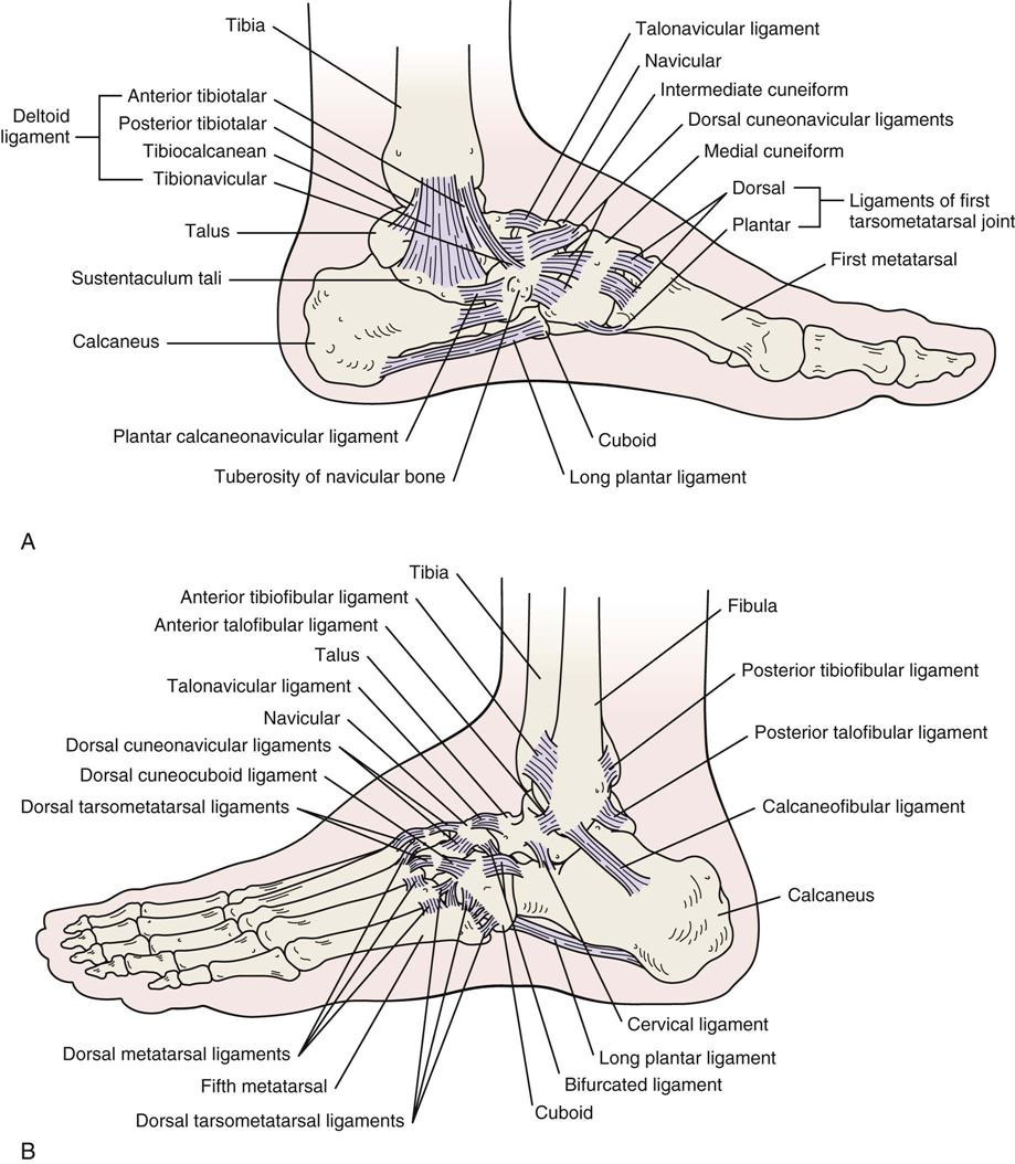 Lower Leg, Ankle, and Foot | Clinical Gate