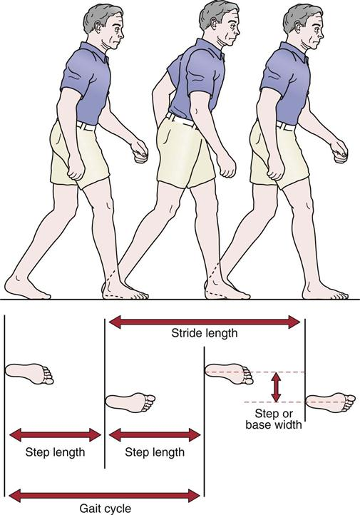 assessment of gait | clinical gate, Muscles