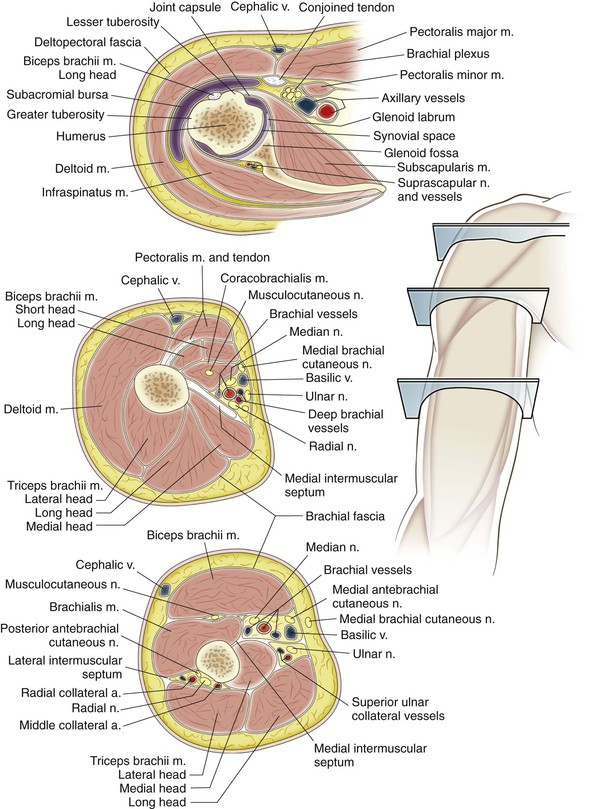 Shoulder And Arm Clinical Gate