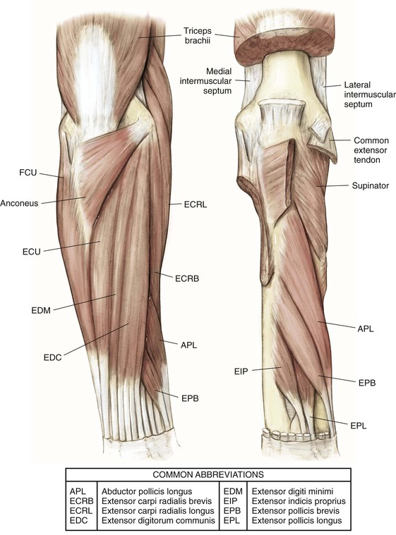 Elbow And Forearm Clinical Gate