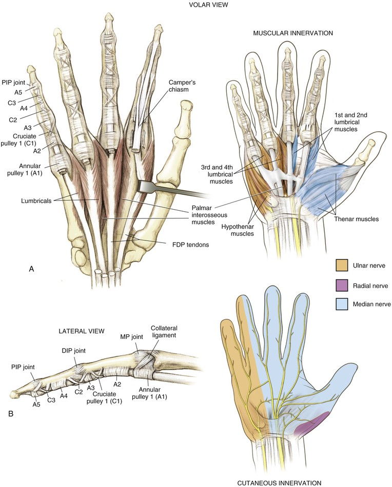 Wrist and Hand | Clinical Gate