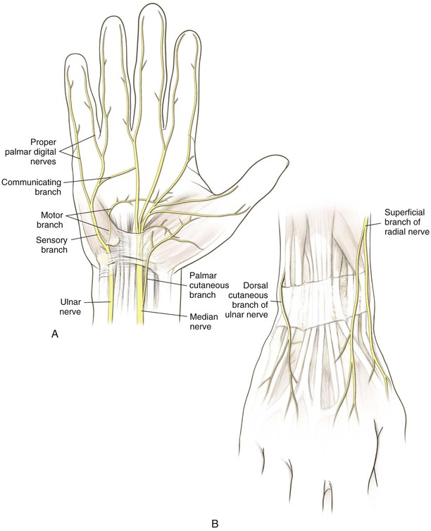 Wrist And Hand Clinical Gate