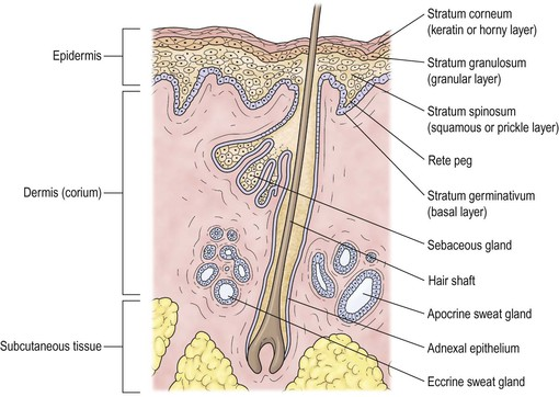Skin And Lacrimal Drainage System