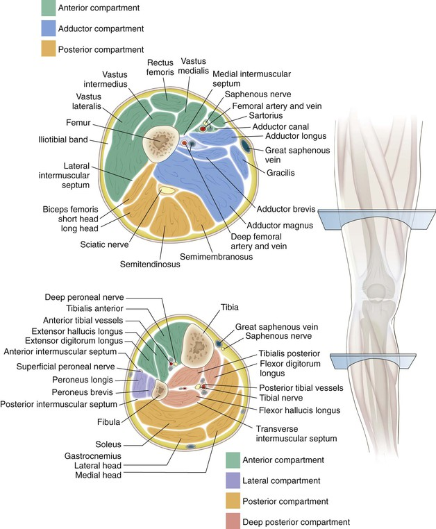 Knee And Lower Leg Clinical Gate