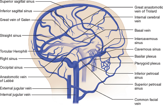 ANATOMY AND PHYSIOLOGY OF CEREBRAL AND SPINAL CORD CIRCULATION ...