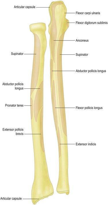 Surgical Anatomy Of The Elbow Clinical Gate
