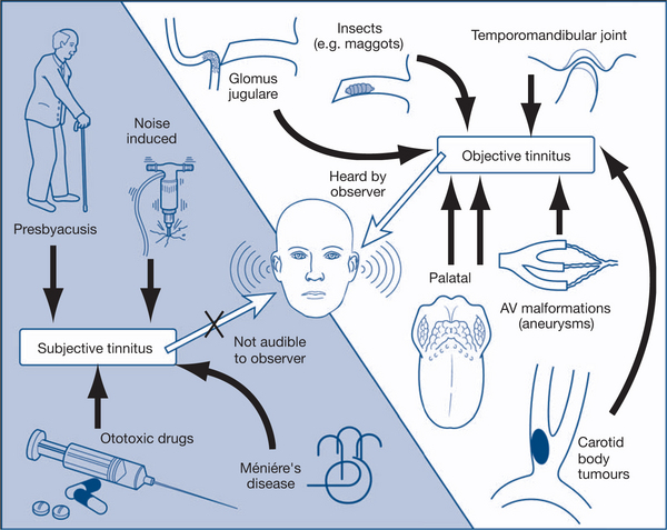 An Overview of the Head and Neck - Clinical Methods