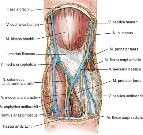 Anatomy Of The Elbow Joint Clinical Gate