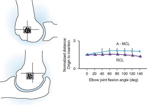 Biomechanics of the Elbow | Clinical Gate