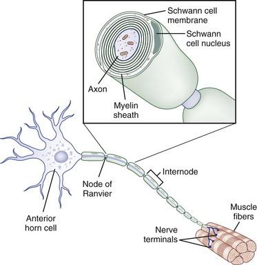 Trauma Of The Nervous System Peripheral Nerve Trauma Clinical Gate