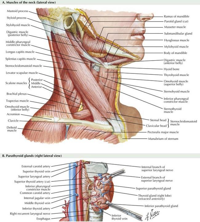 Thyroidectomy And Parathyroidectomy Clinical Gate