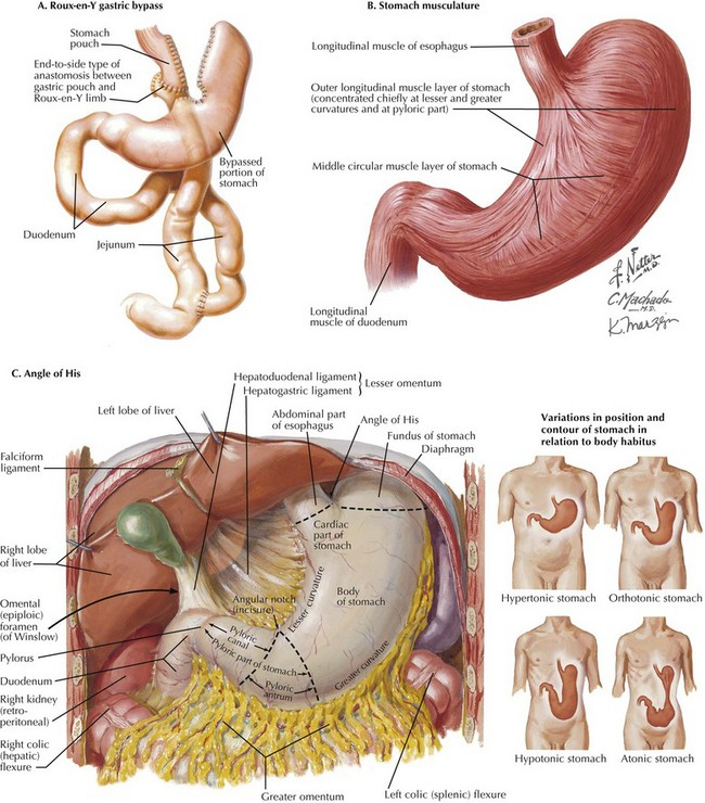 Laparoscopic Roux En Y Gastric Bypass Clinical Gate