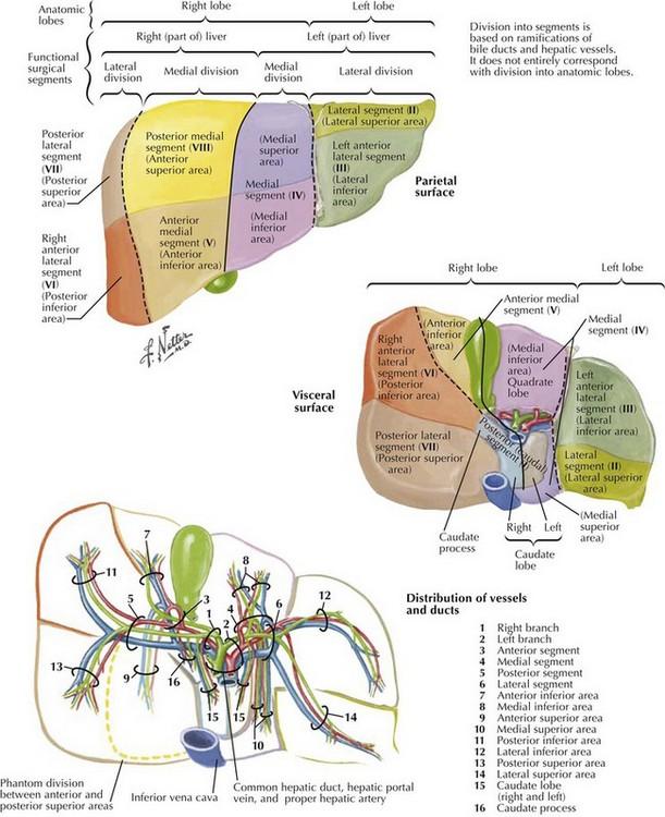 Hepatectomy Clinical Gate