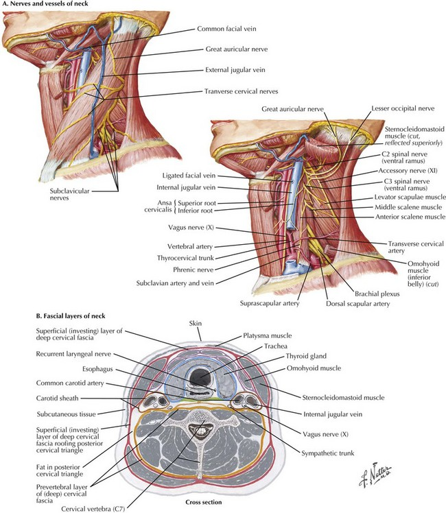 Exposure Of The Carotid Bifurcation Clinical Gate