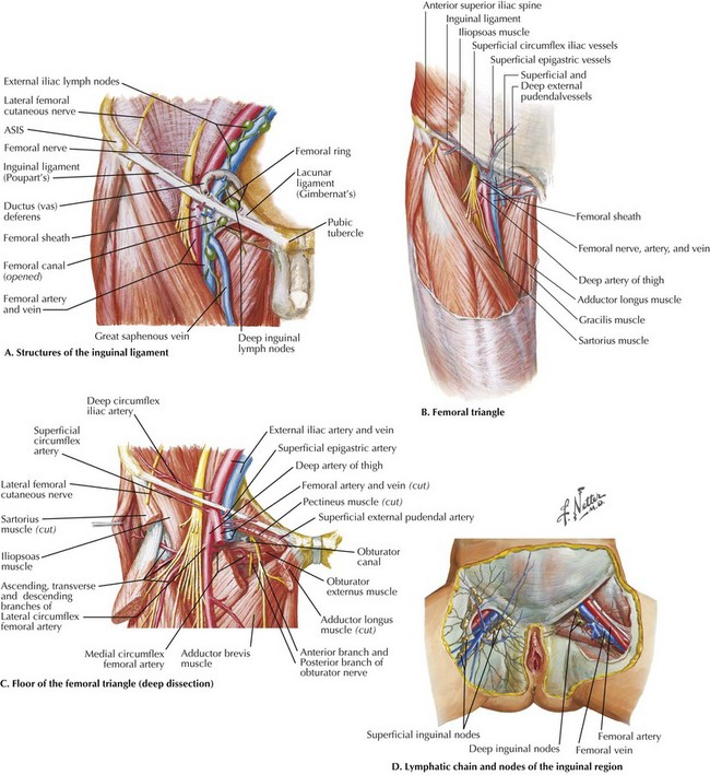 Exposure Of The Common Femoral Artery And Vein Clinical Gate