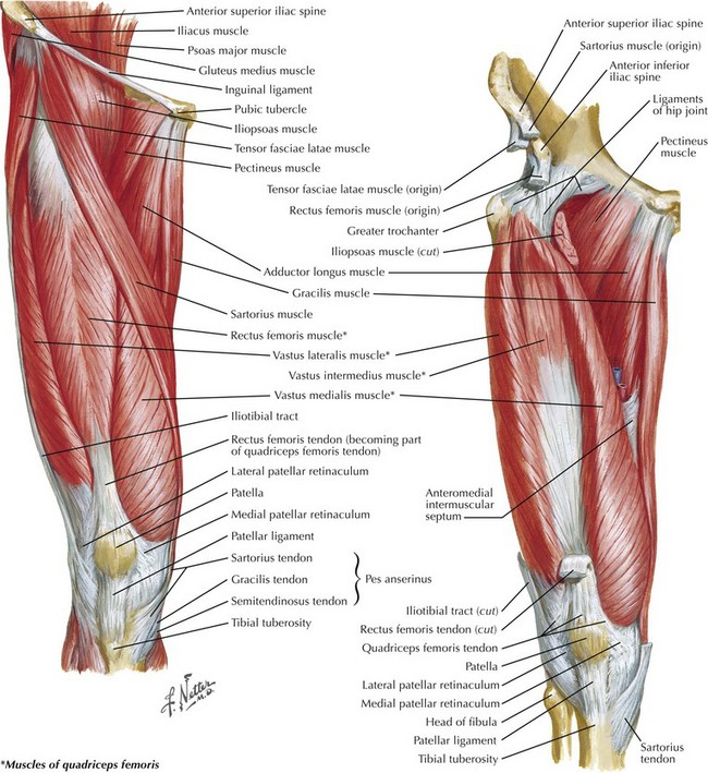 Exposure of the Popliteal Artery and Vein | Clinical Gate