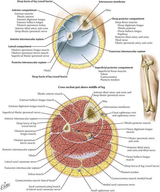 Leg And Forearm Fasciotomy Clinical Gate