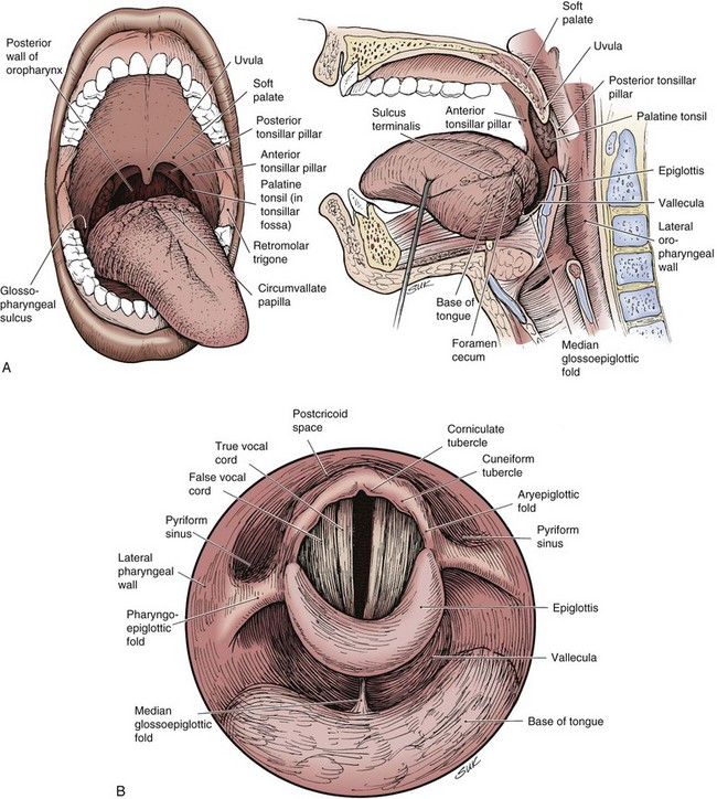 Oropharyngeal Cancer | Clinical Gate
