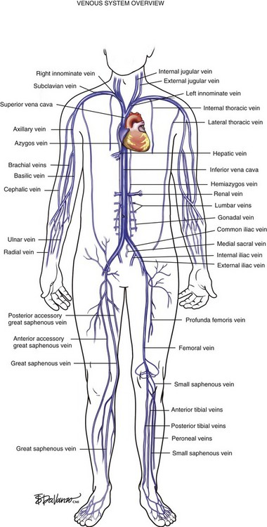 Venous Anatomy Clinical Gate