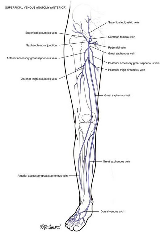 Venous Anatomy Clinical Gate
