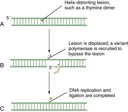 DNA Repair Pathways and Human Cancer   Clinical Gate