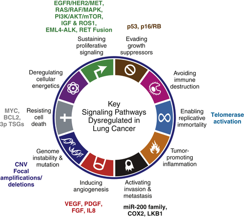 lung cancer genetic mutations