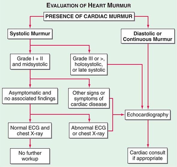 Mild heart murmur in adults x--x.top 2019