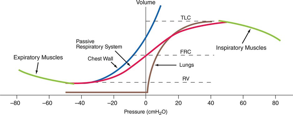 Asthma clinical gate figure 306e 1 pressure volume curves of the isolated lung isolated chest wall combined respiratory system inspiratory muscles and expiratory muscles ccuart Choice Image