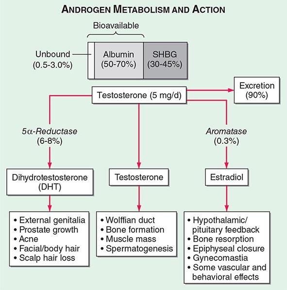 Sex hormone binding globulin low