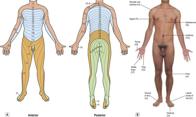 Sensory and motor pathways | Clinical Gate on
