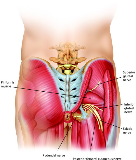 femoral nerve tumor – citybeauty, Muscles