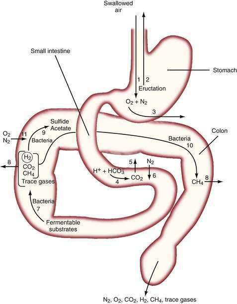 Intestinal gas clinical gate mechanisms of entry and elimination of intestinal gases air is swallowed 1 and a sizable fraction is eructated 2 some oxygen in swallowed air diffuses ccuart Image collections
