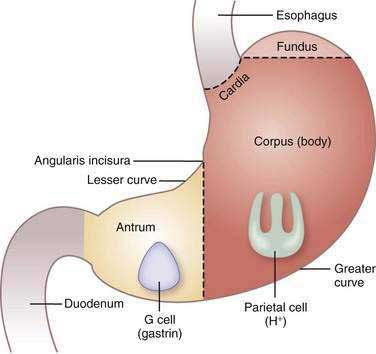 Gastric Secretion Clinical Gate