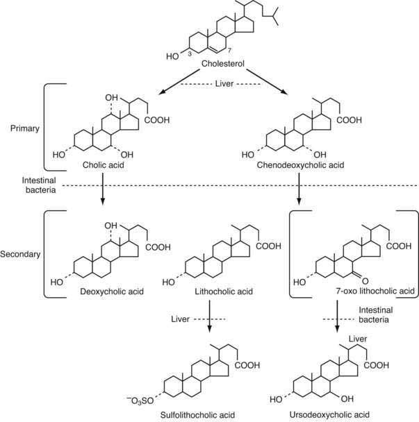 synthesis and secretion of steroid hormones