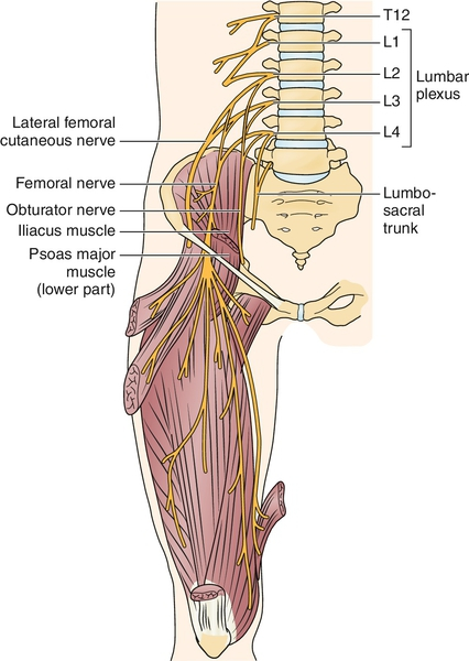 54: femoral neuropathy | clinical gate, Muscles