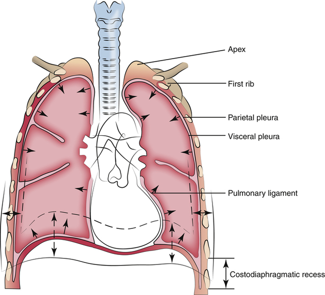 The Lungs And Chest Wall Clinical Gate