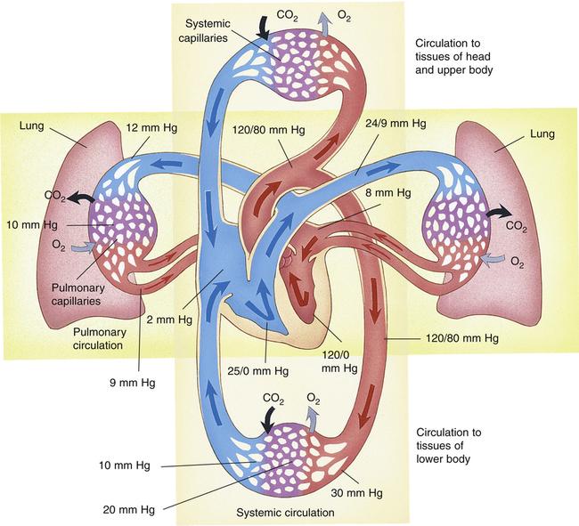 Pulmonary Blood Flow Clinical Gate